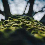 microwandeling als creatieve natuuractiviteit