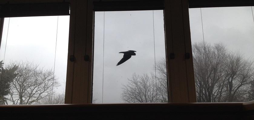 Maak je ramen zichtbaar zodat vogels zich niet doodvliegen tegen je ramen.