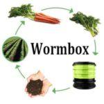 lombricompostage wormbox