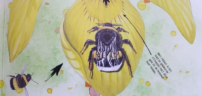 Goed boek voor kinderen over bijen