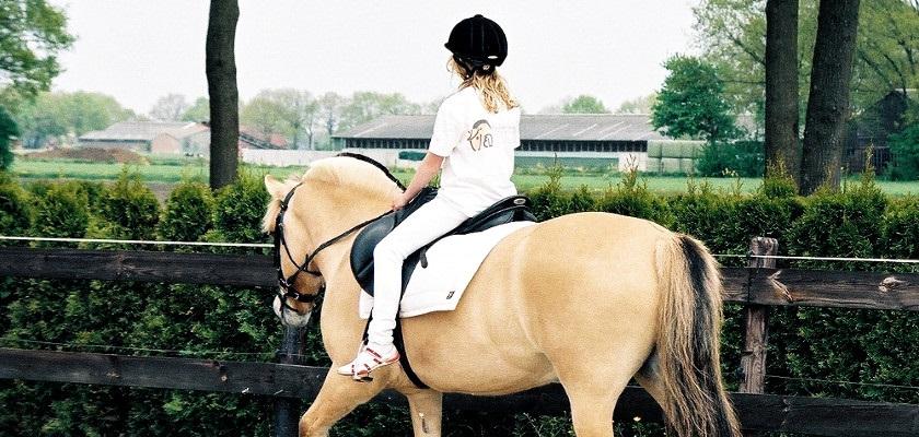 Hobby kinderen en paarden