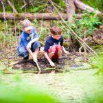 Waterdieren onderzoeke