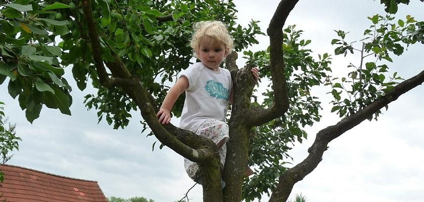 Een klimboom in je natuurlijke speeltuin