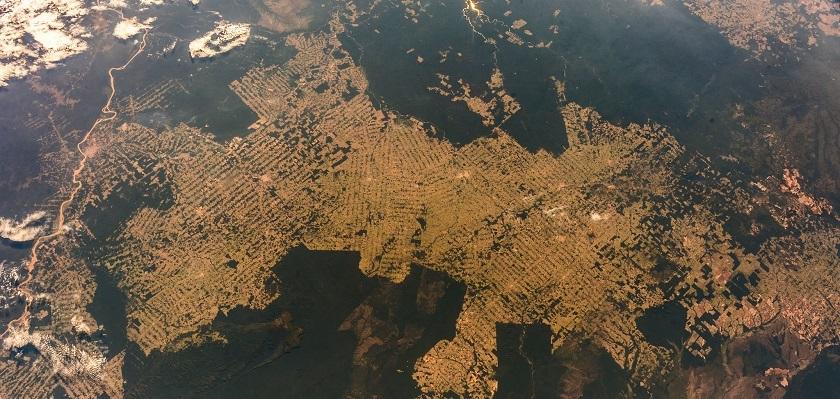 Grote delen van het Amazone regenwoud worden gekapt voor het verbouwen van veevoer.