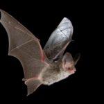vleermuizen tellen doe je met een vleermuisdetector