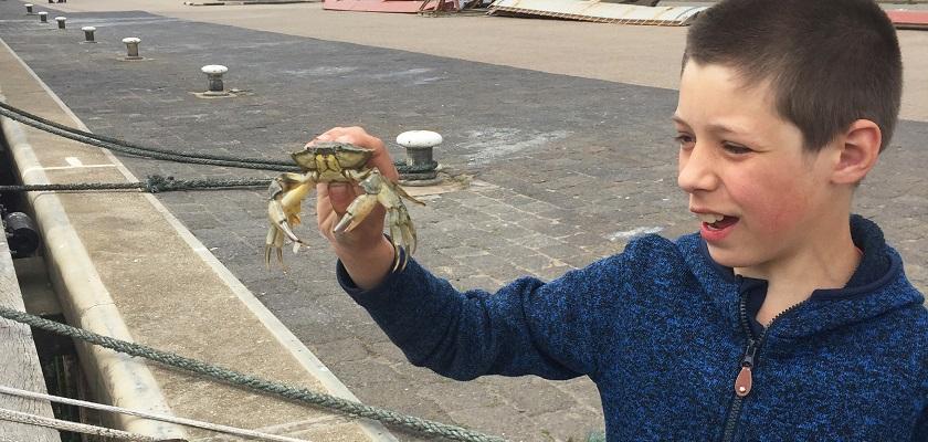 Zo kun je met kinderen krabben vangen!