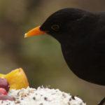 Vogeltaarten zijn lekker voor vogels, maar ook leuk als decoratie