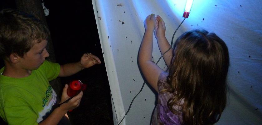 Met een lichtval kun je nachtvlinder vangen